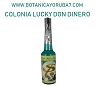 COLONIA LUCKY DON DINERO 7.5 OZ
