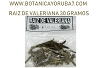 Valeriana's Roots Herbs - Dried - 30 Grams Pack