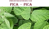 PICA-PICA  /  LEAVES (HOJAS)